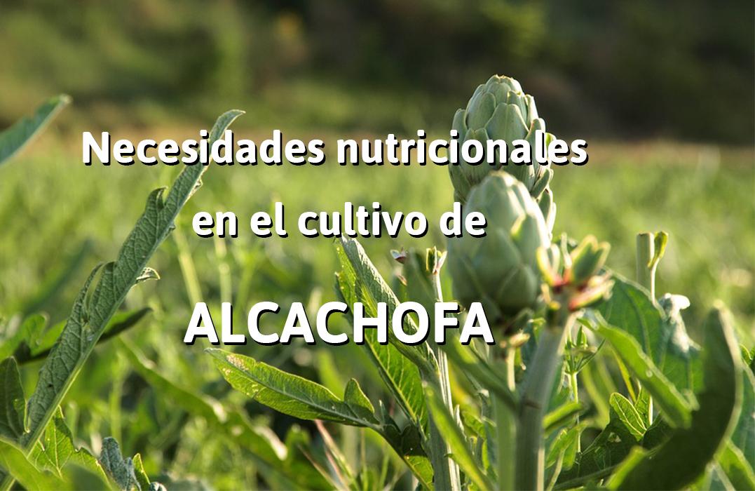 que es la alcachofa concepto